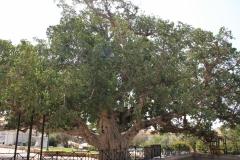 Ay-napa-Larnaka-Pyrga-Cyprus-dostoprimechatelnosti-foto-01-0014