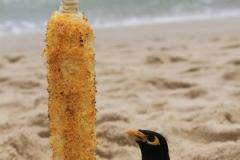 Пляж-Банг-Тао-00018