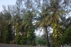alamanda-laguna-phuket-hotel-0024