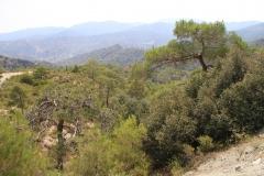 Kykkos-troodas-Cyprus-dostoprimechatelnosti-foto-03-0006
