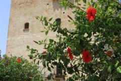 Limassol-Cyprus-dostoprimechatelnosti-foto-02-0002