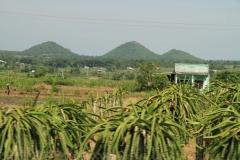 Phan-thiet-dunes-pagoda-foto-Vietnam-00005