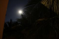 hotel-Golden-Coast-Resort-Spa-foto-00033