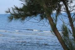 hotel-Golden-Coast-Resort-Spa-foto-beach-00003