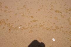 hotel-Golden-Coast-Resort-Spa-foto-beach-00008