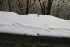 Wroclaw-zamok-kseng-dostoprimechatelnosti-foto-01-0005